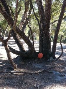 'The Catcher's Mitt' on hole 4 at DeLaveaga Disc Golf Course snags all discs that venture within its grasp. Photo by Jack Trageser.